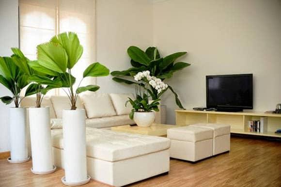 Những Vị Trí Đặt Cây Cảnh Mang Thiên Nhiên Vào Nhà Bạn – P1