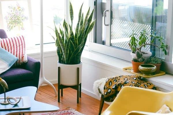 Sử dụng cây cảnh cho không gian phòng khách